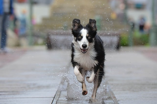 Go dog go dog parks in Dallas Fort Worth Denton