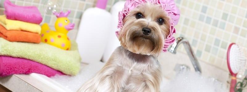 Dog friendly dog spa in DFW