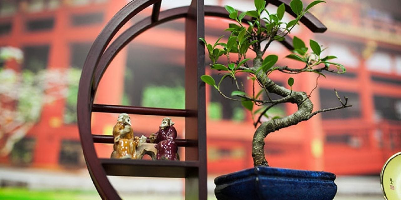 Where To Find Bonsai Trees In DFW